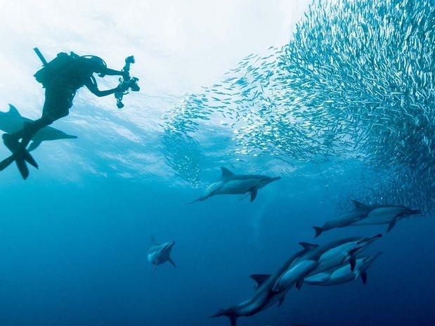 Merguho golfinhos 800
