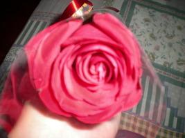 4 anos de namoro! Ganhei uma rosa Linda!